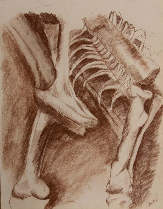 Conte crayon values study of dinosaur bones at Carnegie Mellon Musuem of Natural History