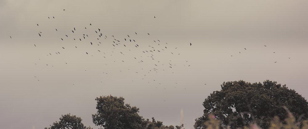 Birds 2_1.34.1 Correct AR.jpg