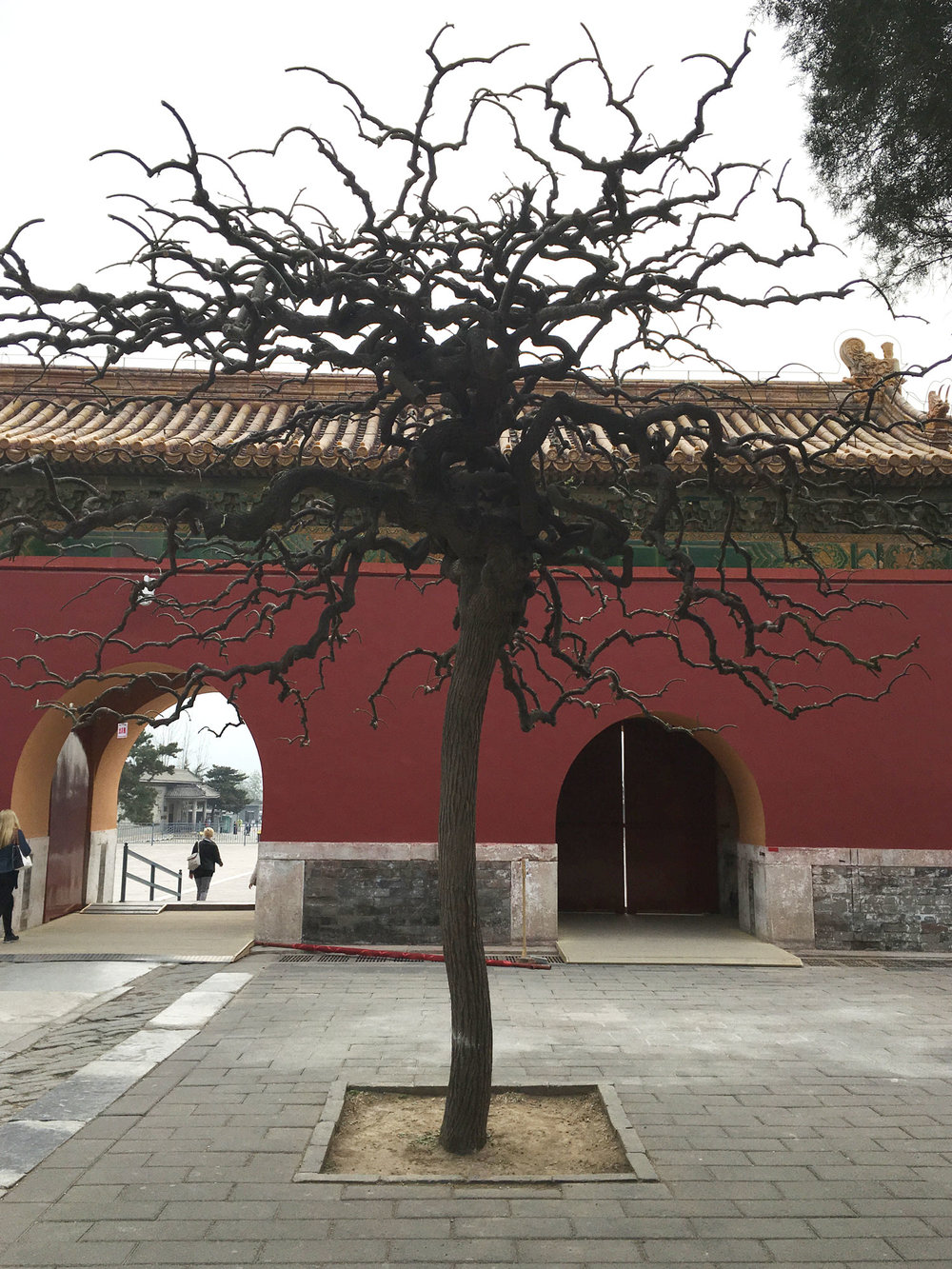 Tree in Beijing