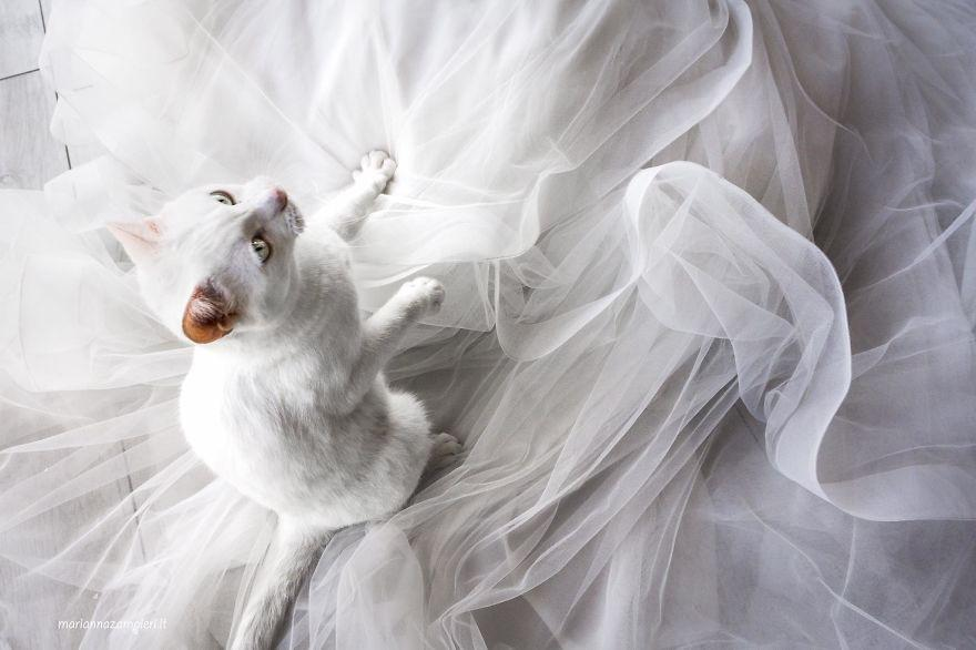cat_wedding_photos_2.jpg