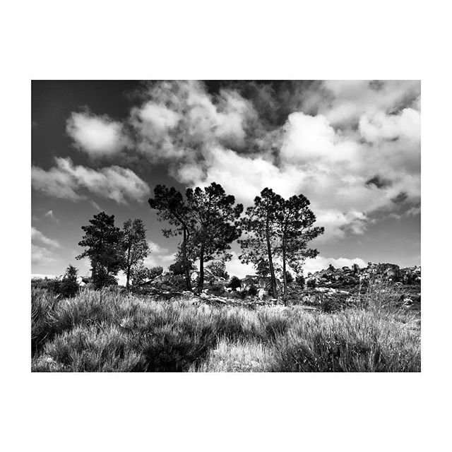 #DouroValley #Barcos #Portugal #Landscape #Vineyards #Trees #Clouds #BlackAndWhite #Photography