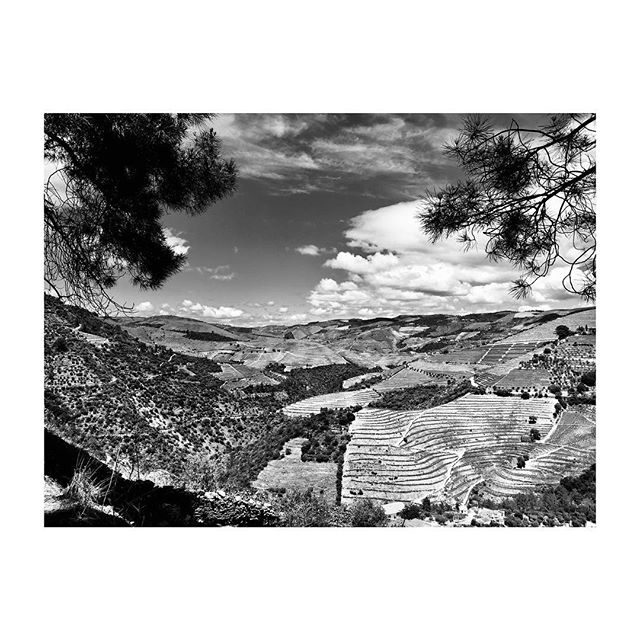 #DouroValley #Portugal #Landscape #Vineyards #BlackAndWhite #Photography