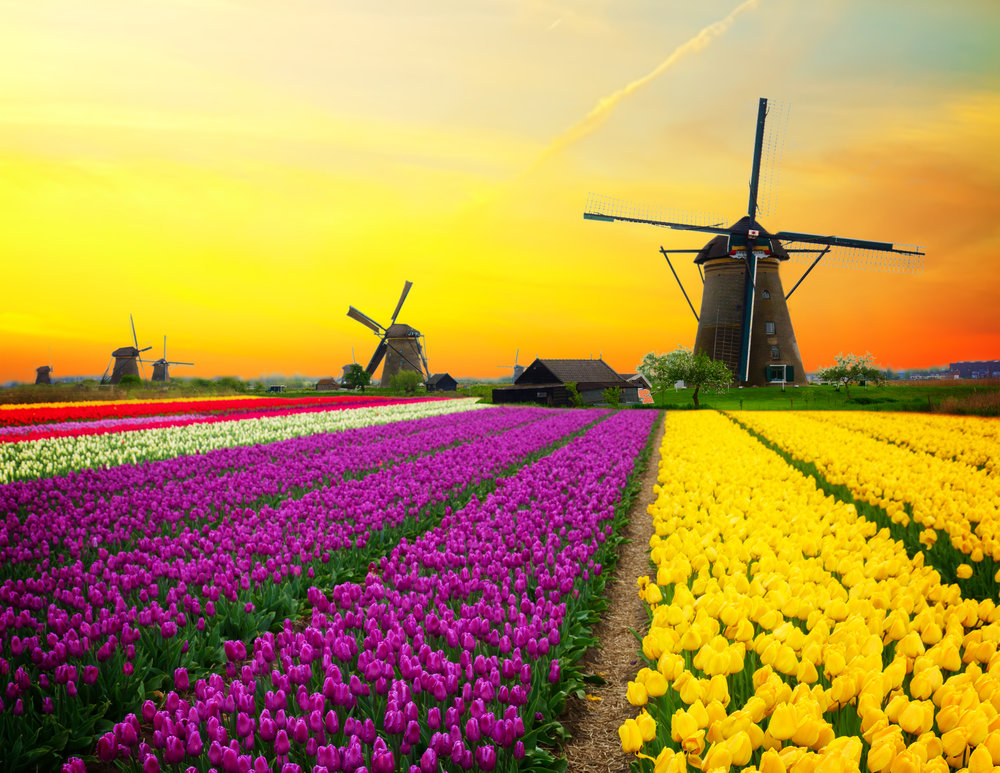 Holland is known for beautiful tulips and windmills.