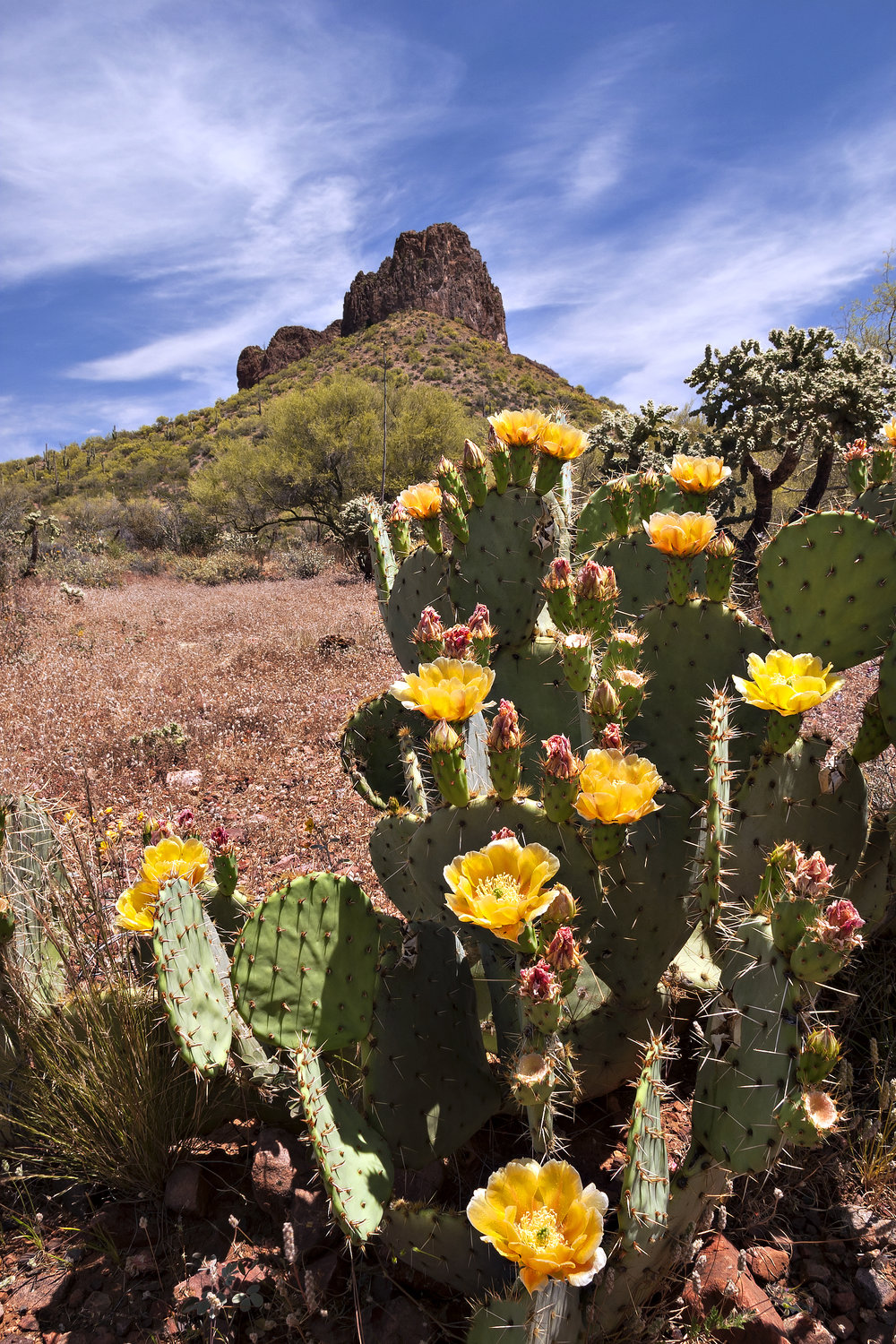 A cactus has many adaptations to survive in the dry desert.