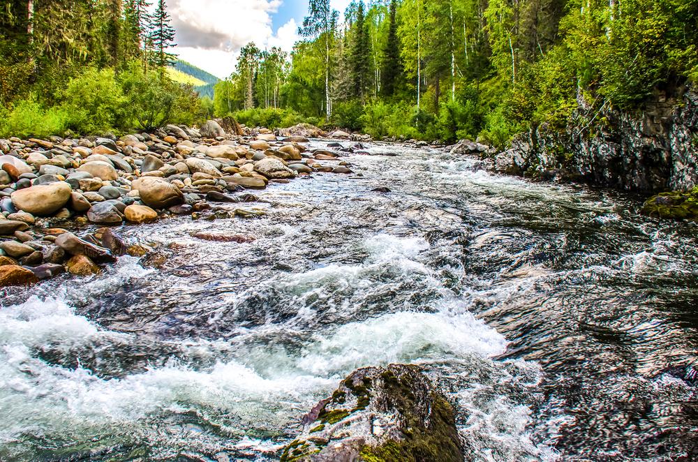 Freshwater Aquatic