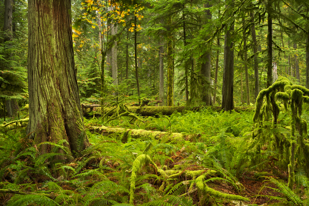 A temperate rainforest is much cooler than a tropical rainforest, but both forests get a lot of rain.