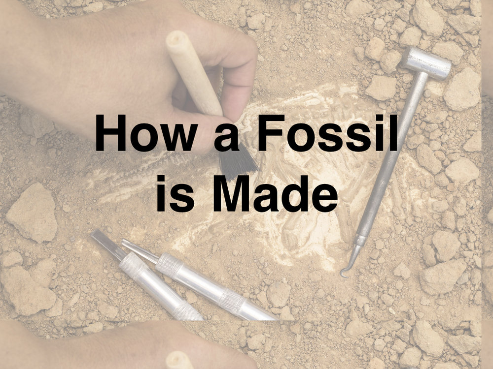 How a Fossil is Made Slideshow.001.jpeg