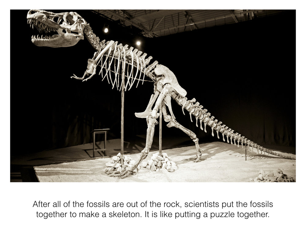 How a Fossil is Made Slideshow.009.jpeg