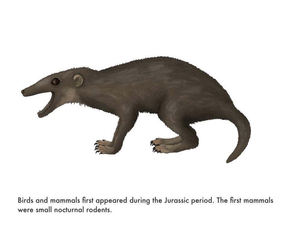 Mesozoic Era.022.jpeg