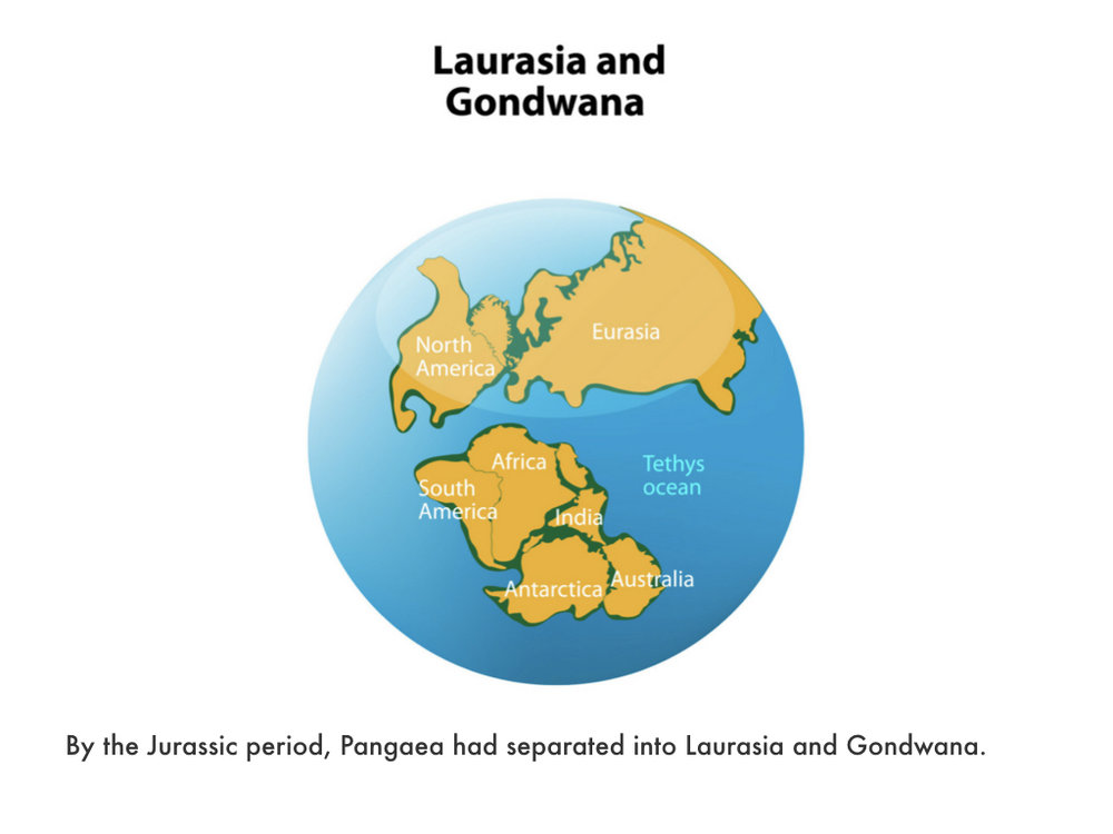 Mesozoic Era.028.jpeg