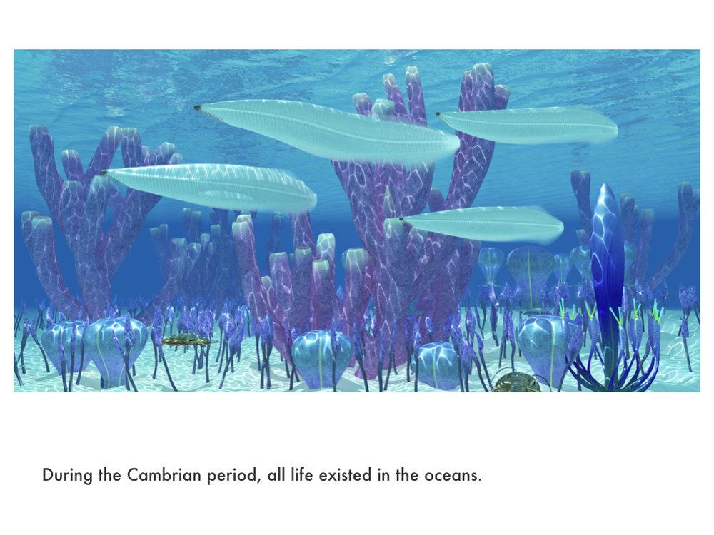 Cambrian Period.022.jpeg