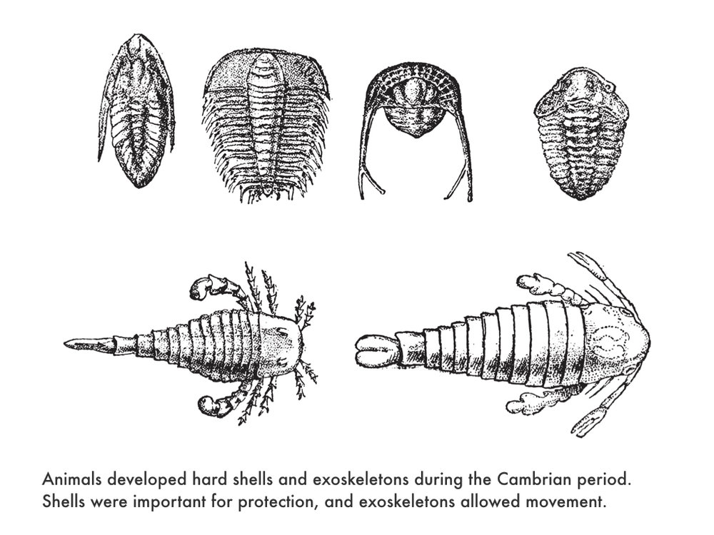 Cambrian Period.025.jpeg