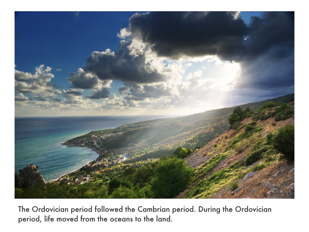 Cambrian Period.030.jpeg