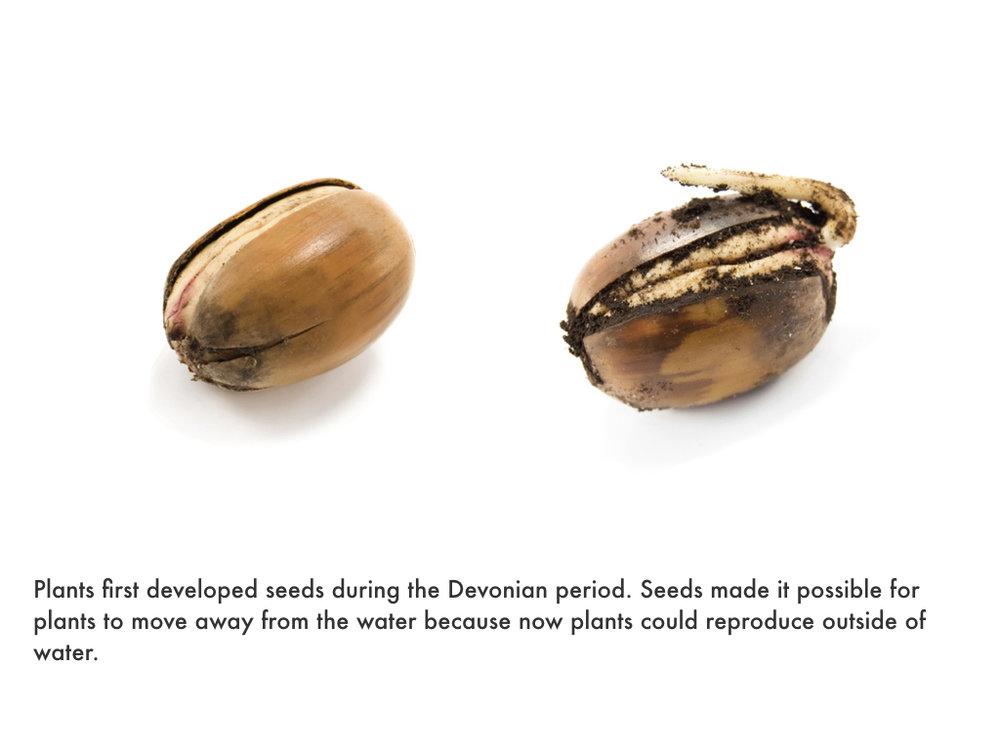 Devonian Period.027.jpeg