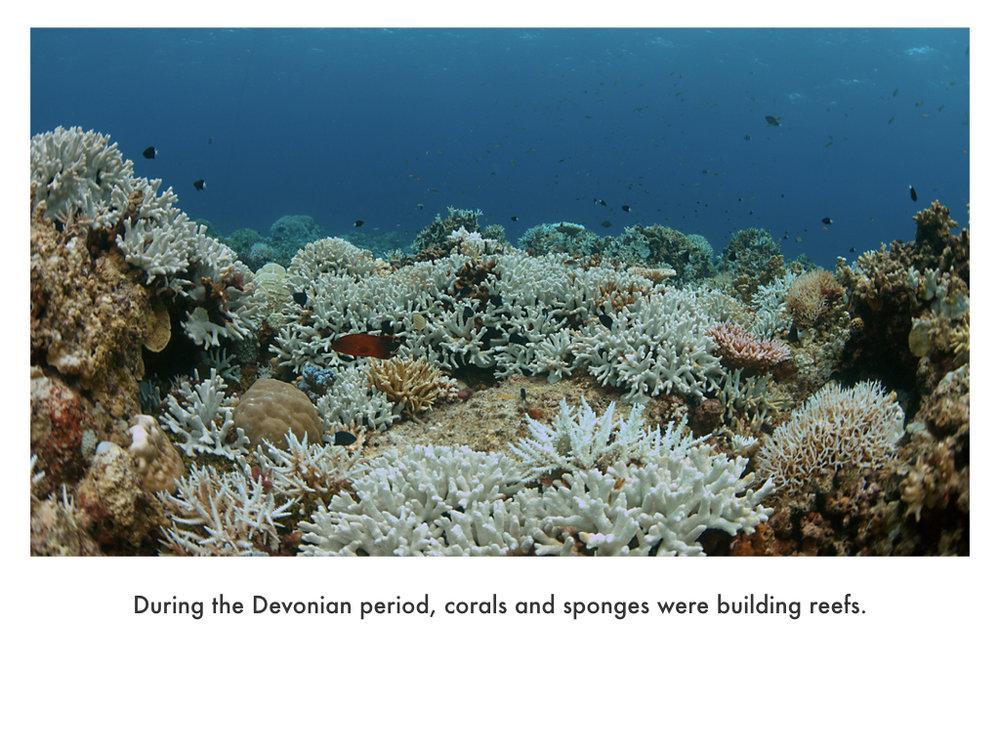 Devonian Period.028.jpeg
