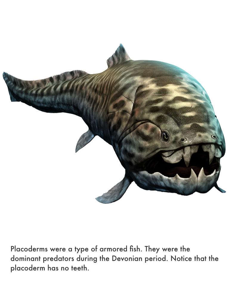 Devonian Period.031.jpeg