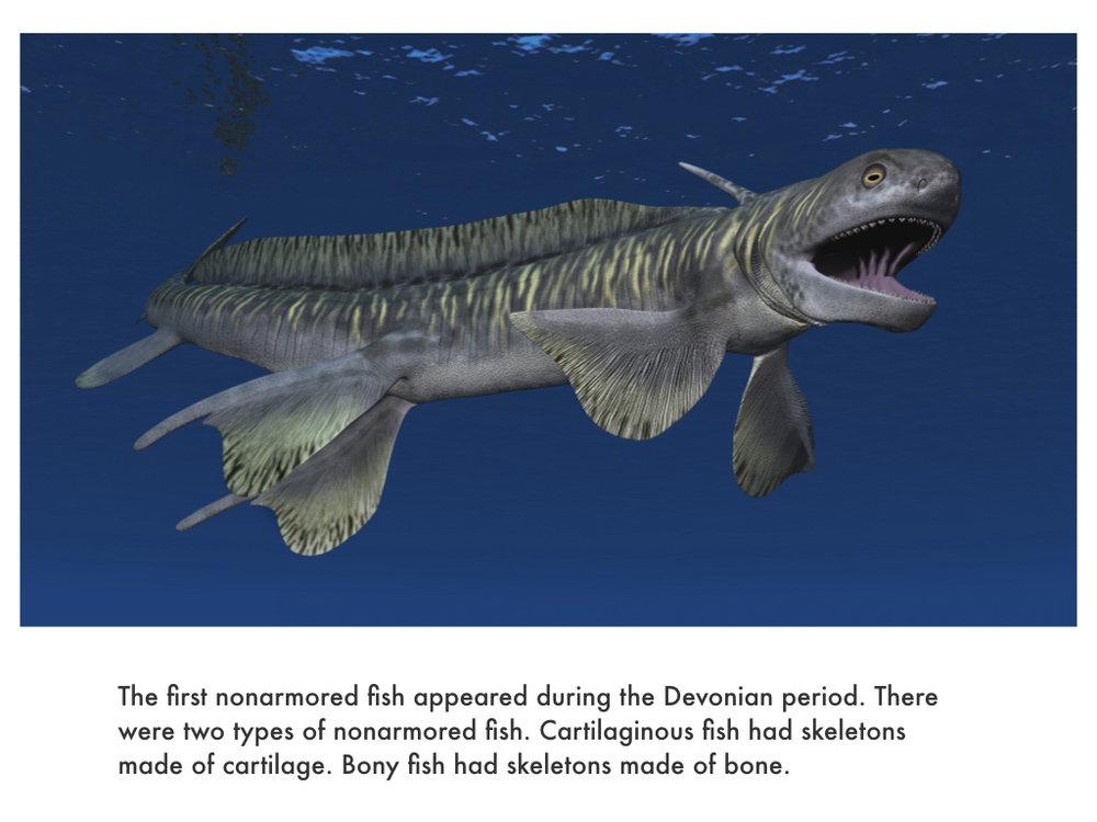 Devonian Period.032.jpeg