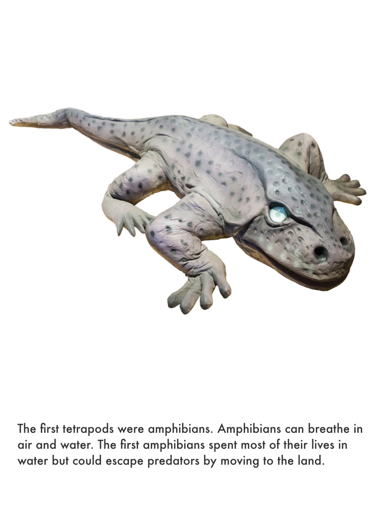 Devonian Period.036.jpeg