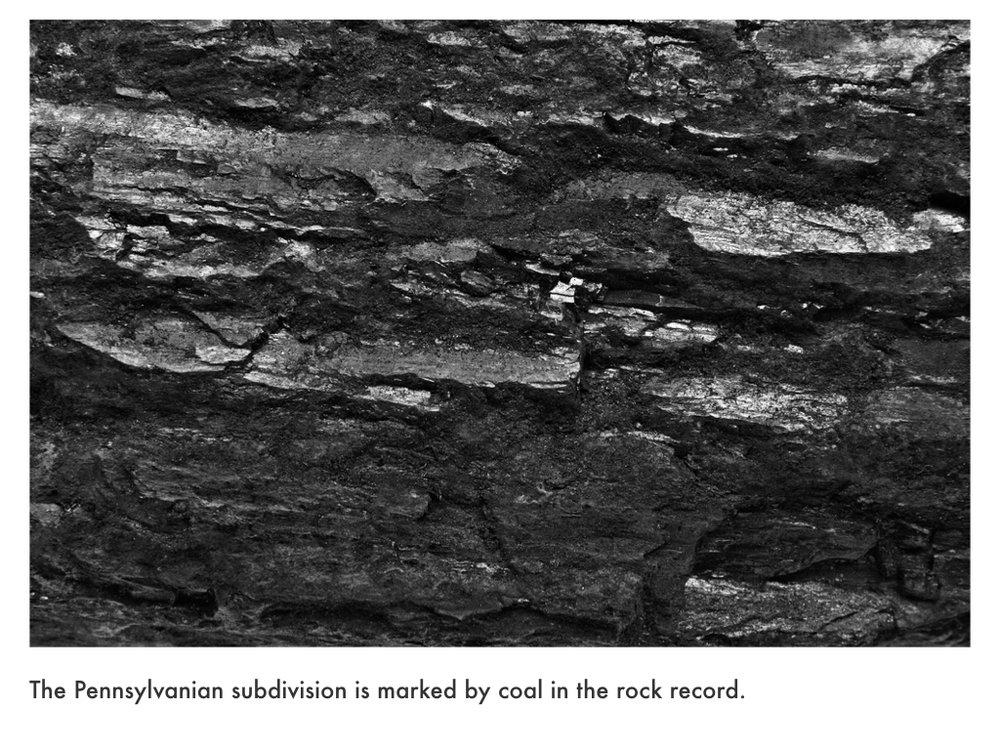 Carboniferous Period.021.jpeg
