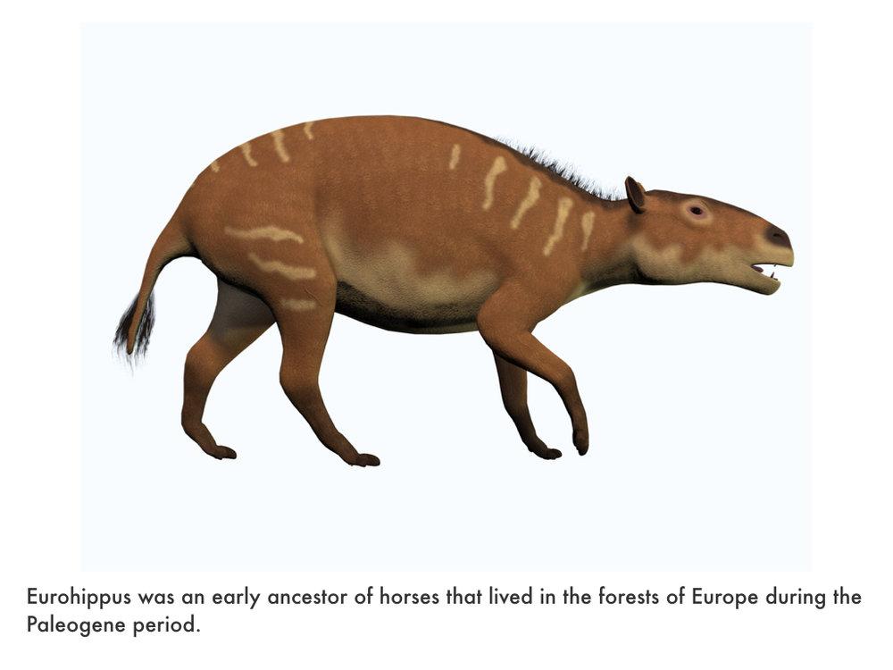 Paleogene Period.018.jpeg