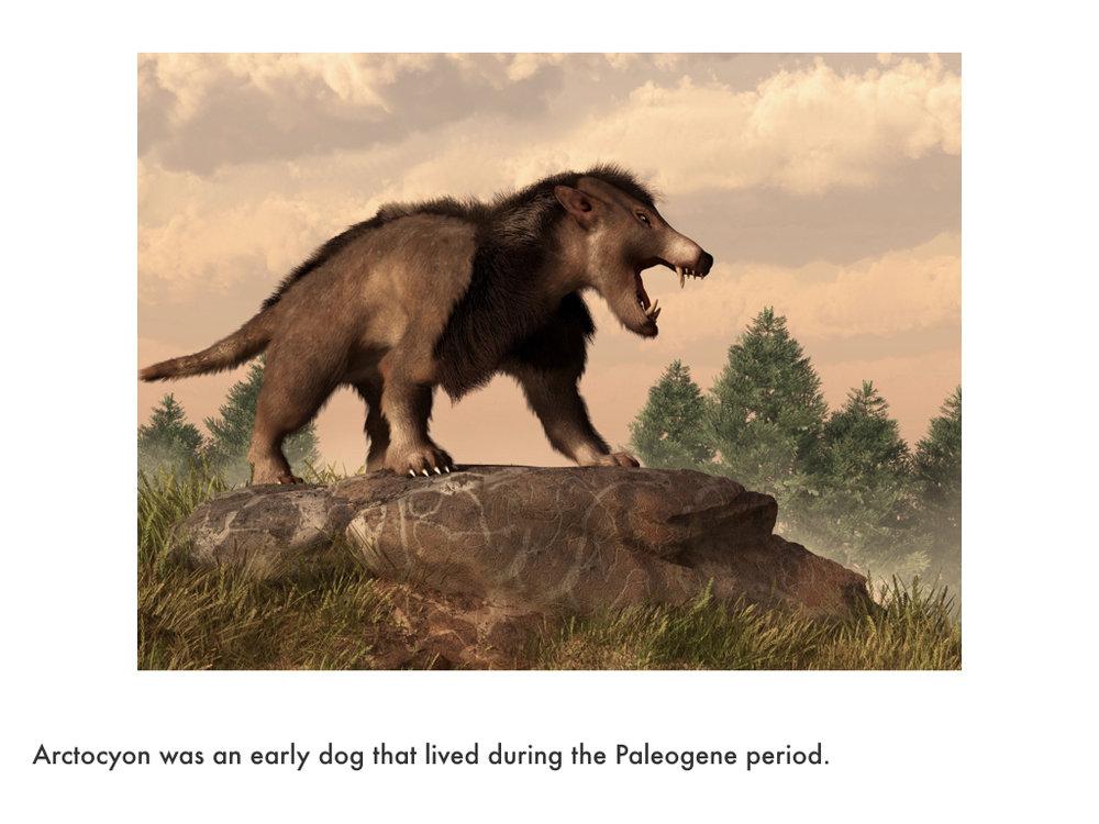 Paleogene Period.019.jpeg