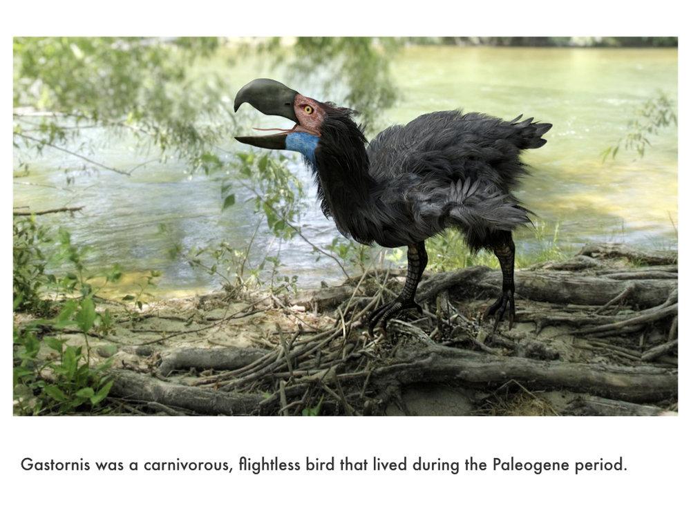 Paleogene Period.020.jpeg