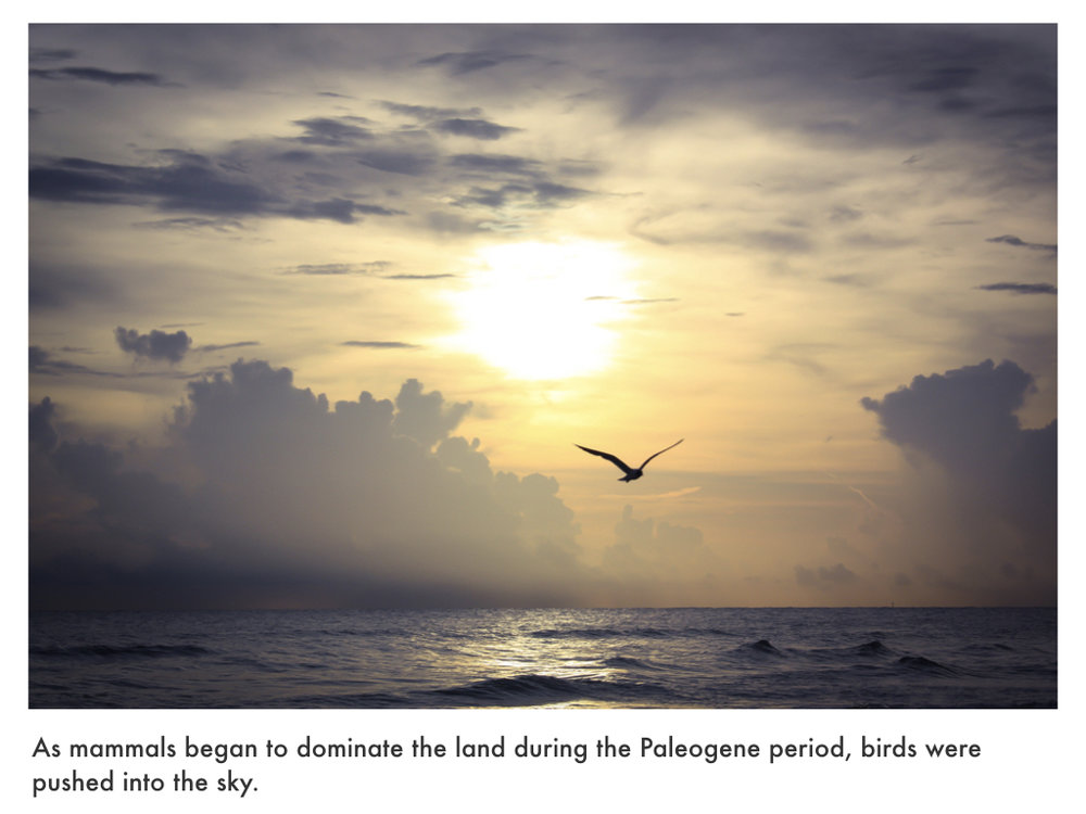 Paleogene Period.021.jpeg