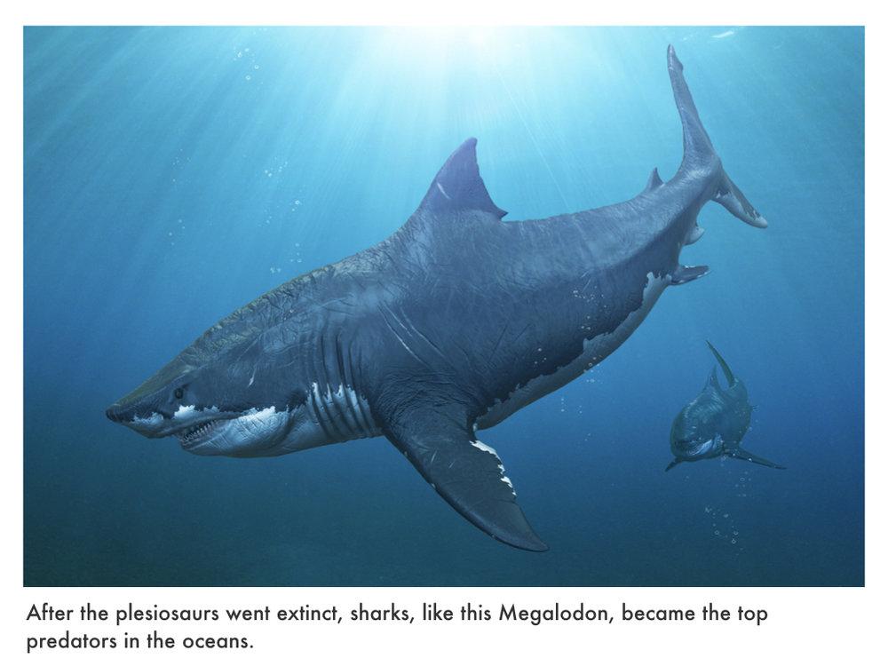 Paleogene Period.026.jpeg