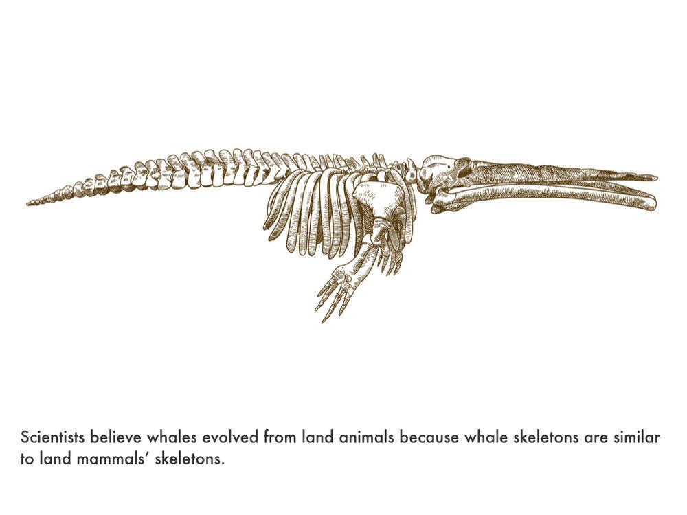Paleogene Period.030.jpeg