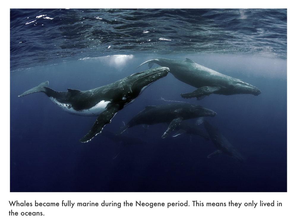 Neogene Period.035.jpeg