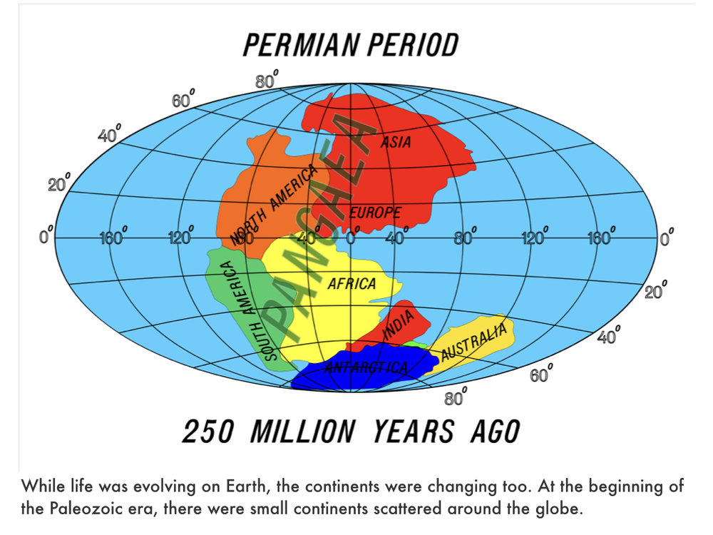 Paleozoic Era.036.jpeg