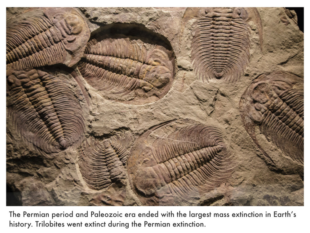 Paleozoic Era.041.jpeg