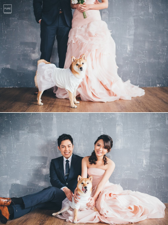 柴犬婚紗,寵物訂做白紗