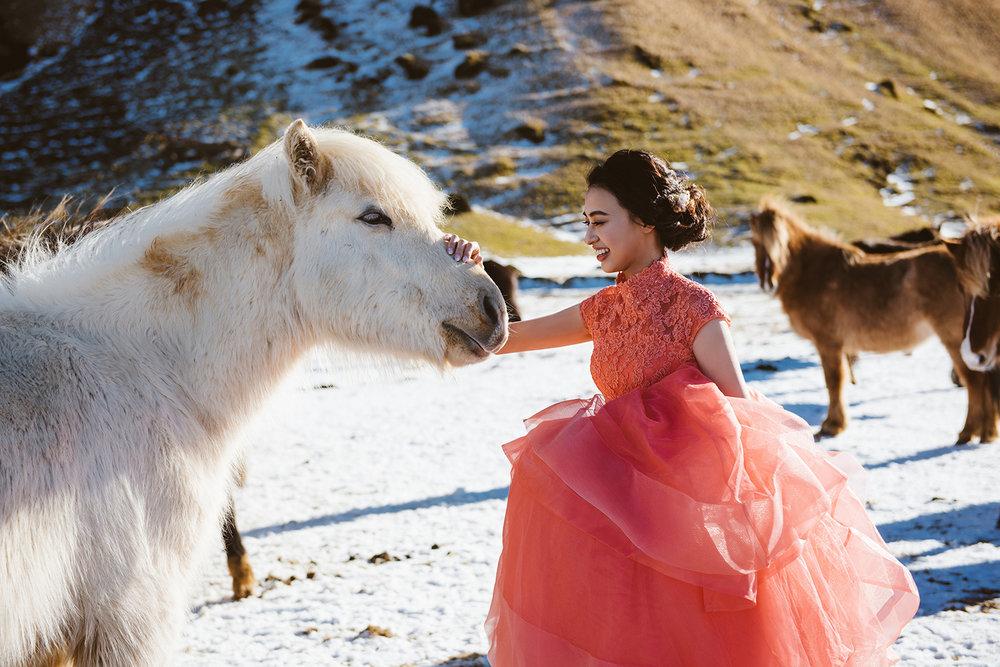 冰島海外婚紗-冰島馬