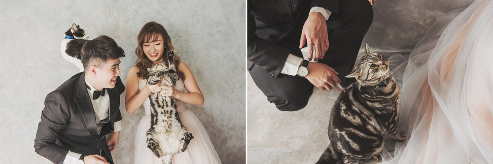 寵物寫真,貓咪婚紗