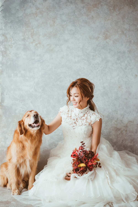 寵物婚紗,台北婚紗,棚拍狗狗
