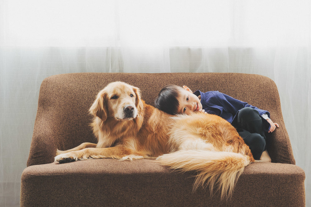 寵物寫真,兒童寫真,寵物全家福,全家福,寵物棚拍,狗狗寫真