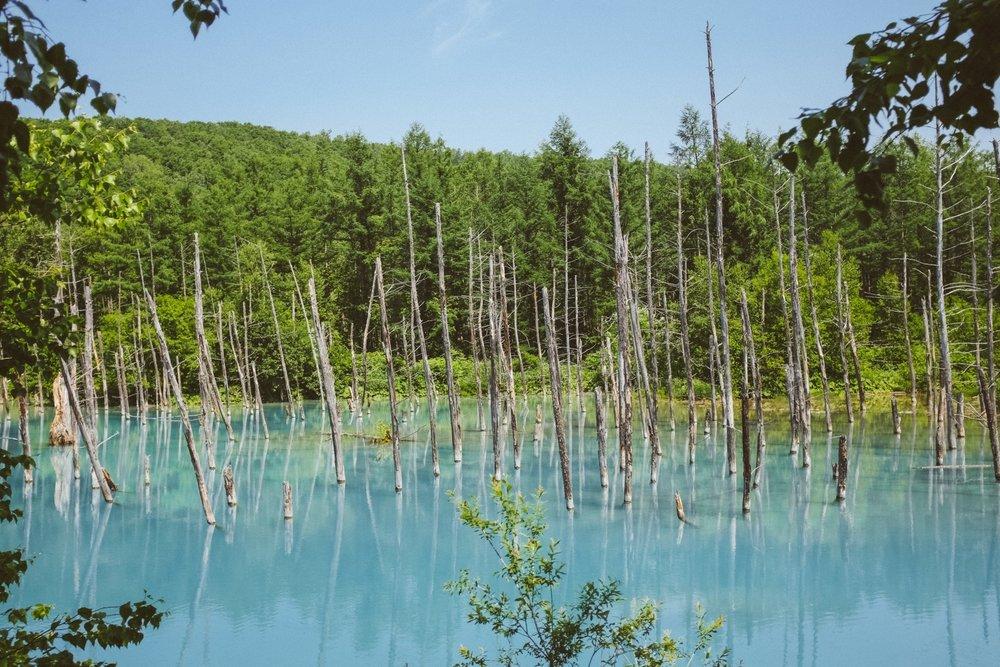 北海道必到景點之一,青池