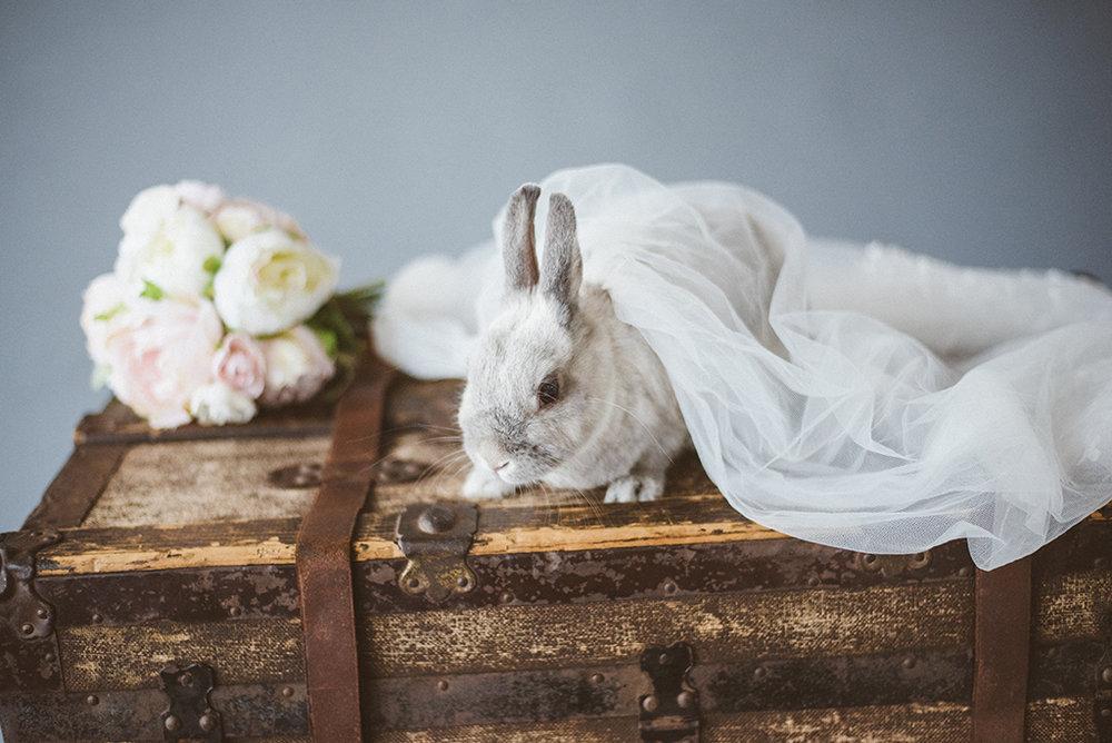 寵物寫真,寵物棚拍,兔子寫真,兔子,全家福,寵物全家福