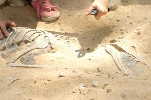 Uncovering_Fossils_Upclose