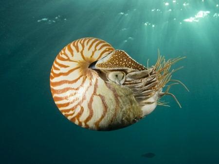 ammonite_nautilus.jpg