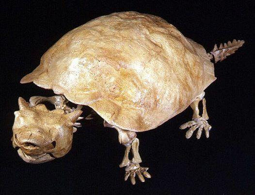 tortoise fossil 3.jpg