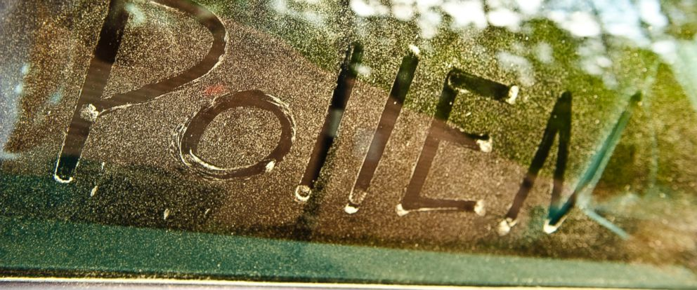 gty_pollen_car_window_jc_150408_12x5_992.jpg