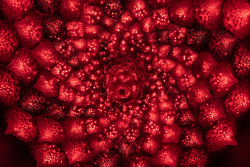 Fractalarium.jpg