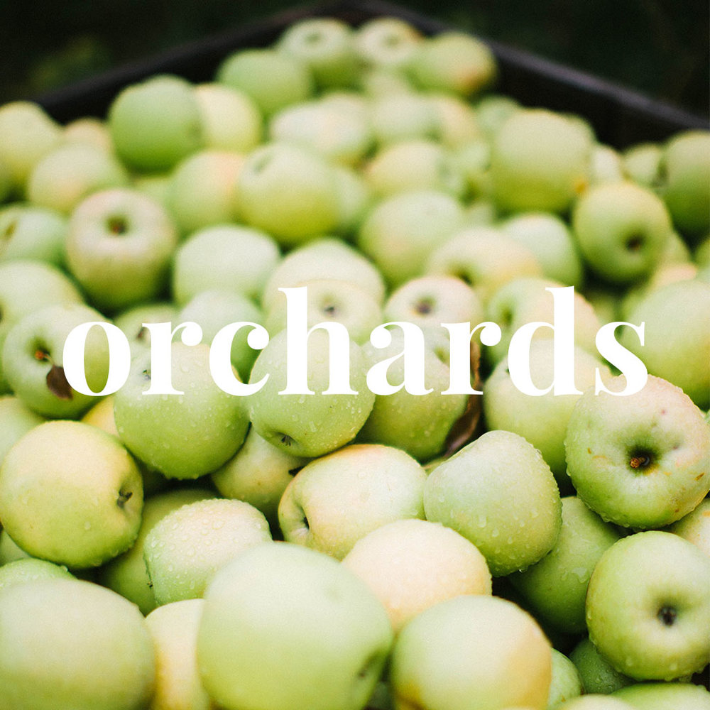 orchards.jpg