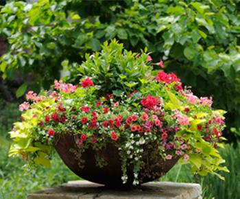 FlowerContainer.jpg