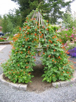 Image via  Molbak's Garden + Home
