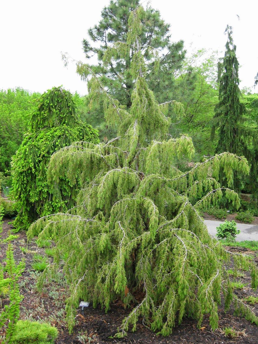 Image via  Rotary Botanical Gardens Horticulture Blog