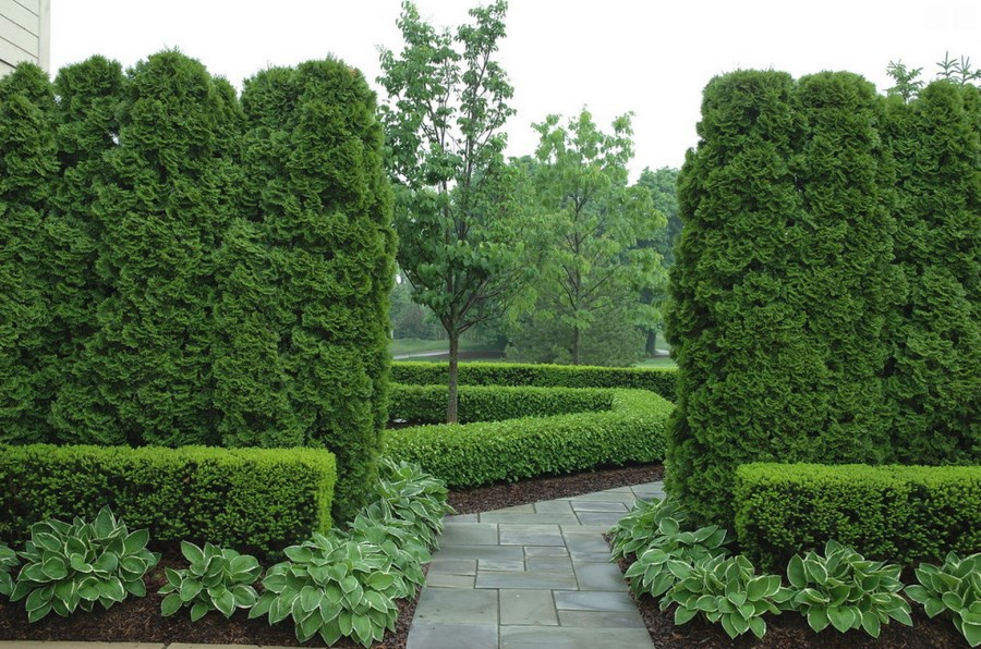 Beau Arb Hedge   Source Arbor Day Foundation