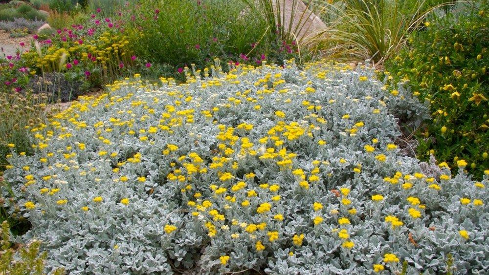 Image via Plant Select
